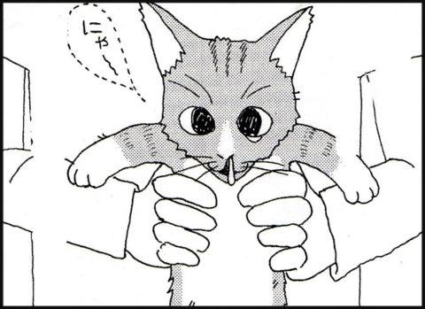 仔猫:にゃ~