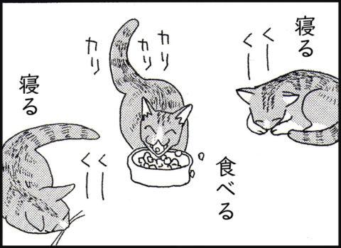 仔猫:寝る・食べる・寝る