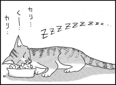 仔猫:食べながら寝る