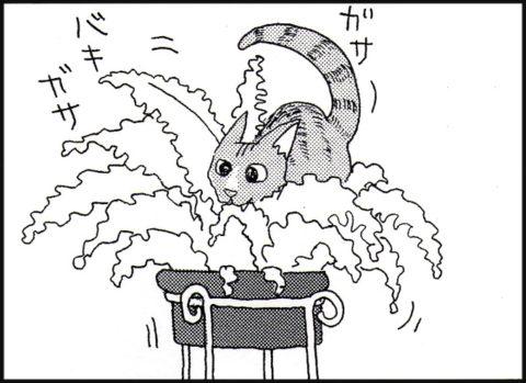 植木鉢の上にいる猫