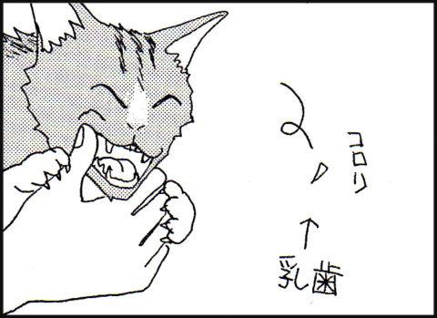 乳歯がぬける猫