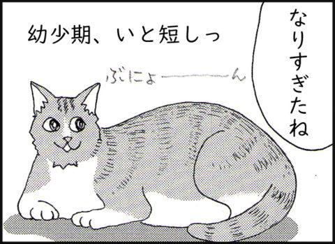 大きくなりすぎた猫 幼少期はいと短し