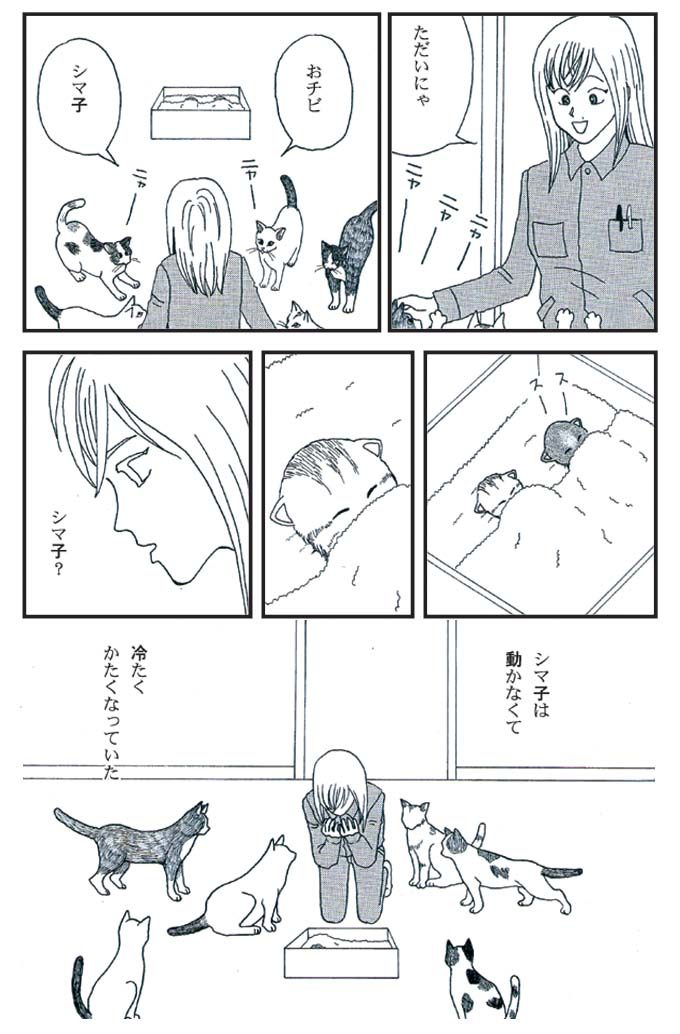 猫漫画:猫育 5話 内容 帰宅 しま子は動かなく冷たくなっていた